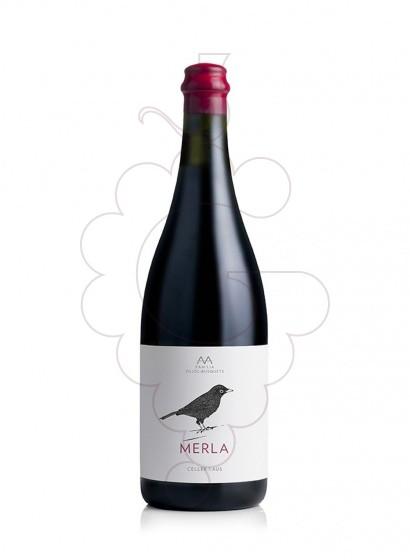 Foto AA Merla  vi negre