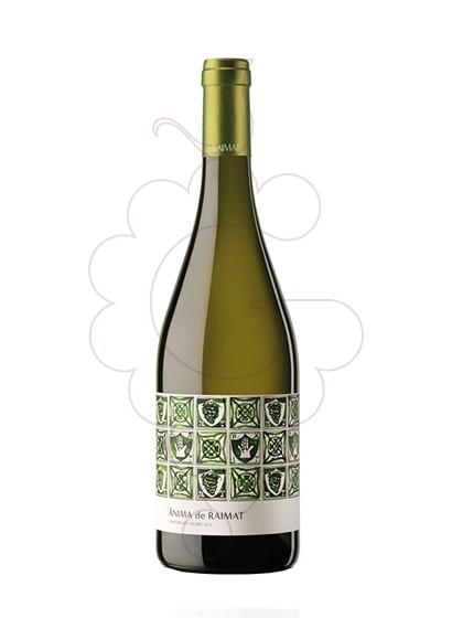 Foto Ànima de Raimat Blanc Magnum vi blanc