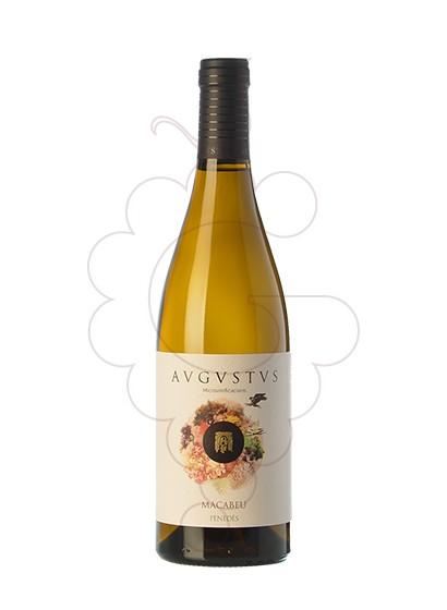 Foto Augustus Macabeu vi blanc