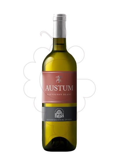 Foto Austum Sauvignon Blanc vi blanc