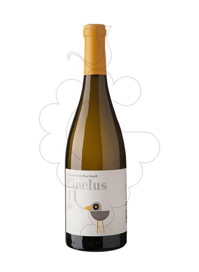 Foto Cinclus vi blanc