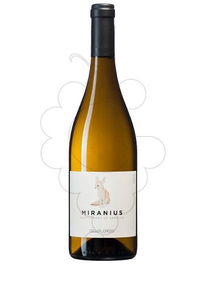 Foto Credo Miranius vi blanc