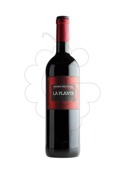 Foto Arzuaga La Planta Magnum vi negre