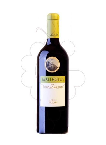 Foto Malleolus de Sanchomartín  vi negre