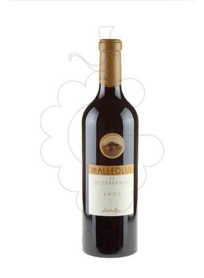 Foto Malleolus de Valderramiro  vi negre