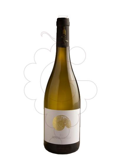 Foto Mas Geli Sense Pressa Blanc vi blanc