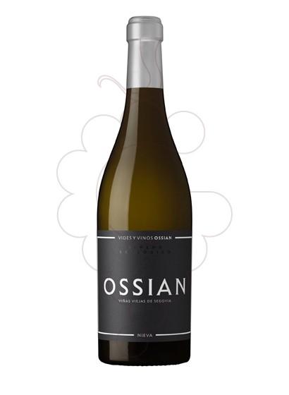 Foto Ossian vi blanc