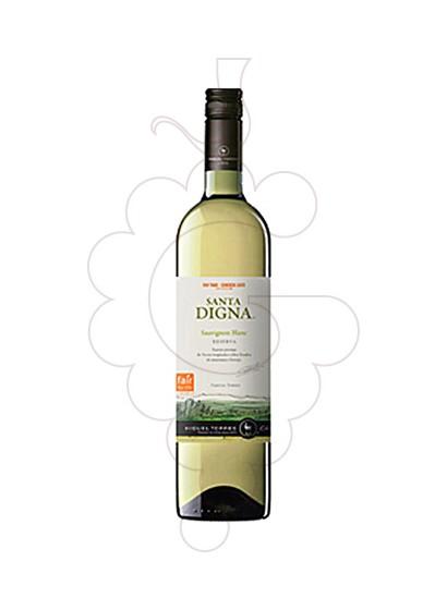 Foto Sta. Digna Xile Blanc Sauvignon vi blanc