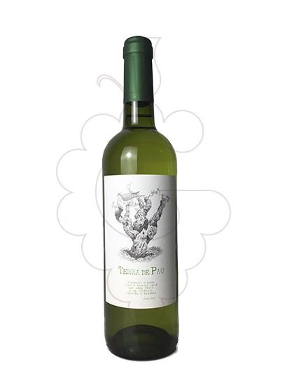 Foto Terra de Pau Blanc vi blanc