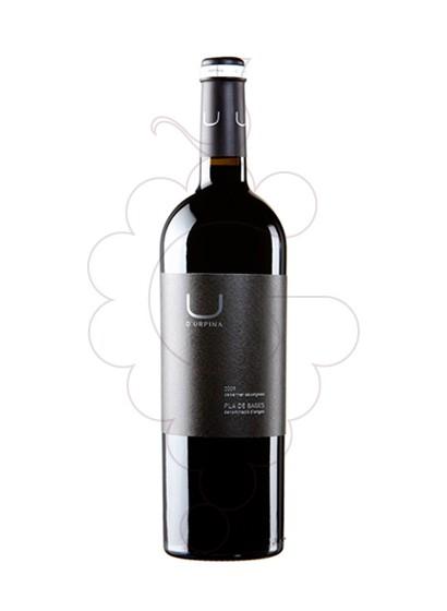 Foto U d'Urpina vi negre