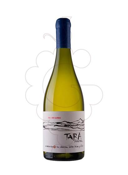 Foto Ventisquero Tara White Wine 1 vi blanc